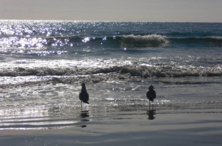 gabbiani in spiaggia